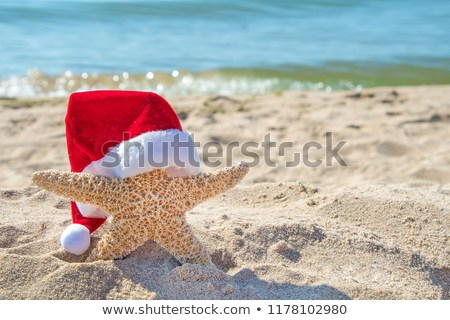christmas-hat-on-starfish-beach-450w-1178102980.jpg