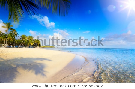 summer-tropical-beach-peaceful-vacation-450w-539682382.jpg